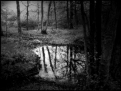 Bos van de negen